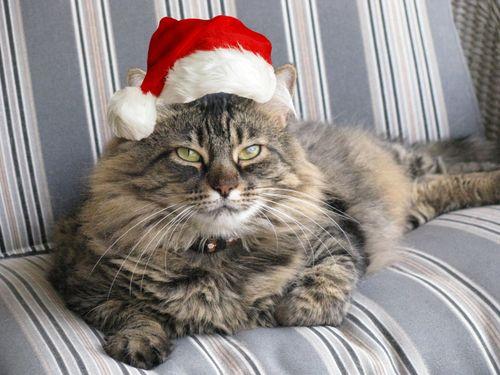 Lucy_santa-hat
